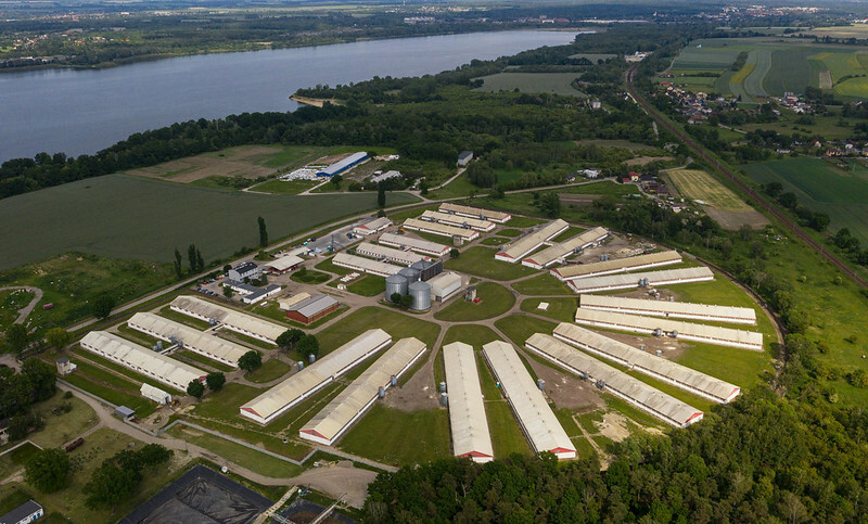 Przemysłowa ferma świń w pobliżu jeziora Dzierżno, woj. Śląskie fot. Andrew Skowron
